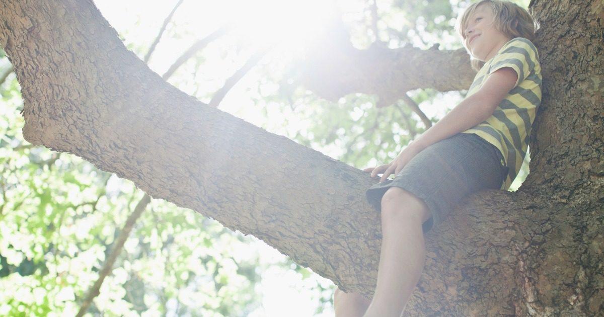wspinanie się po drzewach bezpieczniejsze niż sporty zorganizowane